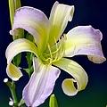Floral Fanfare by Deena Stoddard
