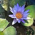 Floral Fascination by Tamara Gibbs