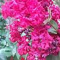 Floral Fever  by Davina Mckinnon