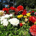 Floral Gardens by Mary Brhel