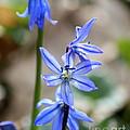 Floral Ladder  by Neal Eslinger