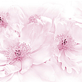 Floral Peonies In Pink by Jennie Marie Schell