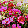 Floral Portulaca Garden by Bonnie Willis