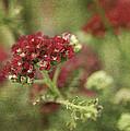 Floral Prose by Bill Pevlor