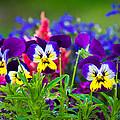 Floral Salad by Bill Pevlor