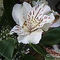 Floral by Shree Batta