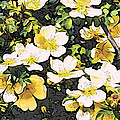 Floral Yellow by Alice Gipson