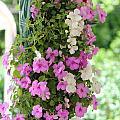 Floral3 by Jim Mann