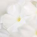 Floralcloud by Janice Bajek