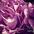 Floribunda Purple Roses With Scratched Metal Texture by Beverly Claire Kaiya