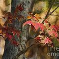 Florida Autumn Leaves by Deborah Benoit