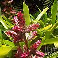 Florida Beauty by Jennifer Lavigne