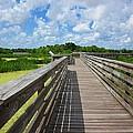 Florida Boardwalk by MTBobbins Photography