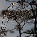Florida Dream Catcher by Roy Thoman
