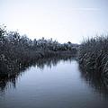 Florida Everglades by Madeline Ellis