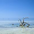 Florida Keys Lonely Root by Melanie Viola