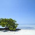 Florida Keys Lonely Tree by Melanie Viola