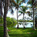 Florida Lake by Carey Chen