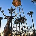Florida Longhorns by Betty Eich