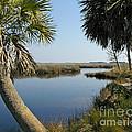 Florida Marshland by Nancy L Marshall