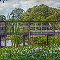 Florida Nature by Hanny Heim