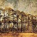 Florida Pine 4 by Skip Nall
