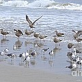 Florida Seabirds by Carol  Bradley