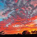 Florida Spring Sunset by Deborah Good