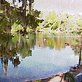 Florida Springs Waiting by Alice Gipson