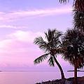 Florida Sunrise by David Davis