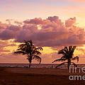 Florida Sunrise by Les Palenik
