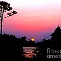 Florida Sunset by Anita Lewis