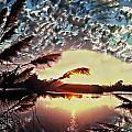 Florida Sunset by Anthony Dezenzio
