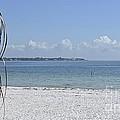 Florida Sunshine by Carol  Bradley