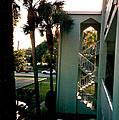 Florida Trees 3 by Verana Stark