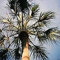 Florida Trees by Verana Stark