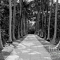 Florida Walkway Black And White by Carey Chen