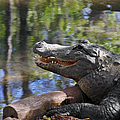 Florida - Where The Alligator Smiles by Christine Till