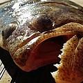Flounder Face 2 10/26 by Mark Lemmon