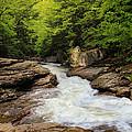 Flow Of Forest Zen by Rachel Cohen