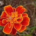 Flower 1 by Florentina De Carvalho