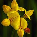Flower 105 by Ingrid Smith-Johnsen