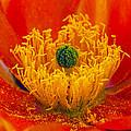 Flower 108 by Ingrid Smith-Johnsen
