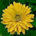 Flower 111 by Patsy Pratt