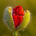 Flower 124 by Ingrid Smith-Johnsen