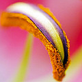Flower 148 by Ingrid Smith-Johnsen