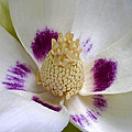 Flower 179 by Ingrid Smith-Johnsen