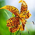 Flower 183 by Ingrid Smith-Johnsen