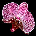 Flower 280 by Ingrid Smith-Johnsen
