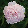 Flower 3 by Edward P